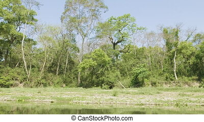 Rainforest in the national park Chitwan, Nepal. - Rainforest...