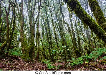Rainforest, La Gomera