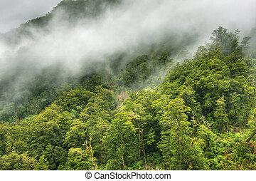 rainforest, landschaftsbild