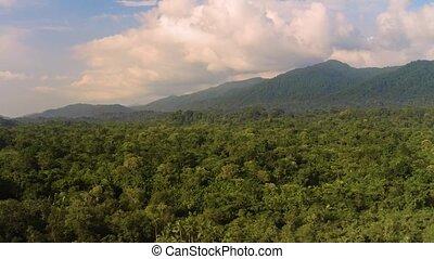 Rainforest, Lush Humid Woods - Amazon Rainforest aerial ...