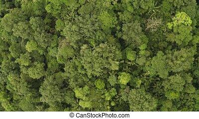 Rainforest, Lush Humid Woods, drone footage - Amazon ...
