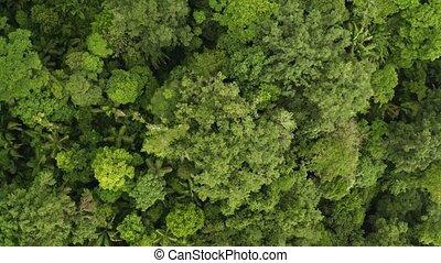 Rainforest, Lush Humid Woods, drone footage - Amazon ...