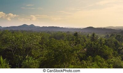 Rainforest, Lush Humid Woods - Tropical Rainforest aerial ...
