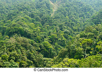 Luxurious forest top view at Genting Highlands
