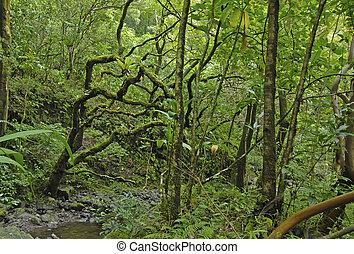 rainforest, maui, hawaï