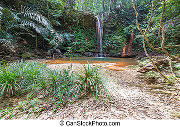 Rainforest natural pool