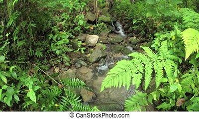 rainforest., naturel, promenade, ruisseau, long, yeux, regard