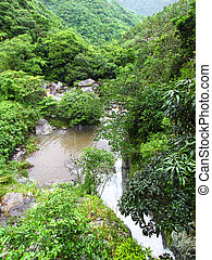 Rainforest of Puerto Rico