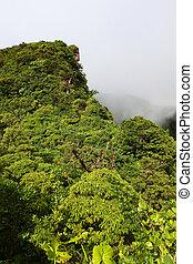 Rainforest of Saint Kitts