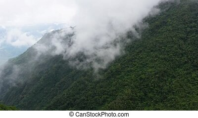 rainforest on the top of a mountain covered with fog in the morning. Cordillera on Luzon Island, Philippines, aerial view.