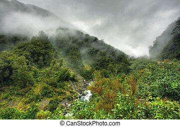 rainforest, paisaje