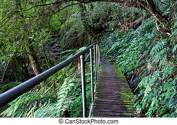rainforest path - a path with handrail leads through the...