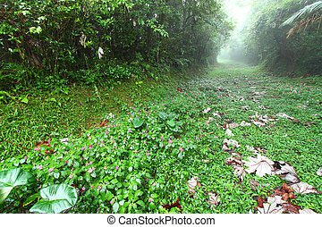 Rainforest Path - Puerto Rico