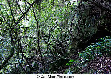moss and lichen covered plants, rocks and trees in the oxley world heritage rainforest