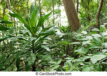 rainforest plants - dracaena and other plants in asian...