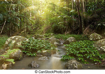 rainforest rays - rays of sunlight stream through the...