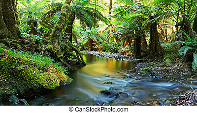 Rainforest River Panorama - A river flows softly through...