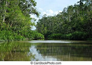 Rainforest River - Lush green rainforest along the river...