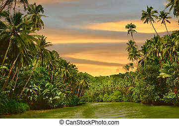 Rainforest River Sunset - Rainforest river cruise in sunset...