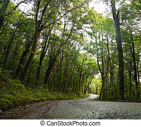 Rainforest road - Dirt road through dense rainforest at New...