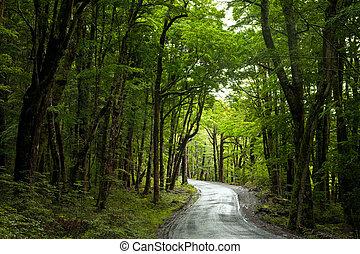 Rainforest road - Dirt road through dense rainforest at New...