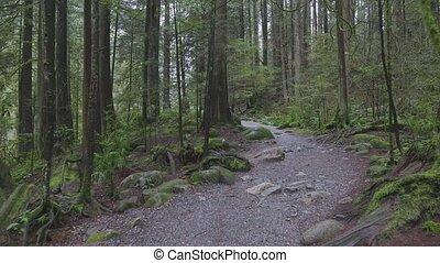 rainforest, sentier, beau