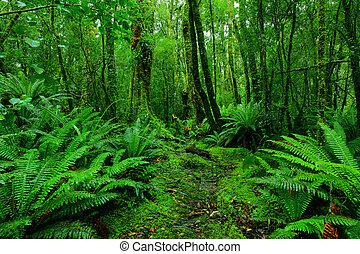 rainforest, steegjes