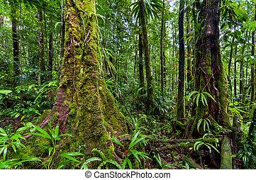 Rainforest - Scene in rainforest