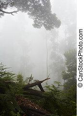 Rainforest - Foggy rainforest