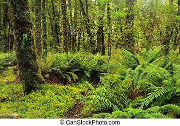 Rainforest in New Zealand