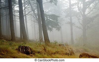 rainforest - Madeira rainforest of laurisilva at the...