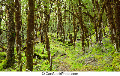 Rainforest - In the depths of the rain forest of New Zealand
