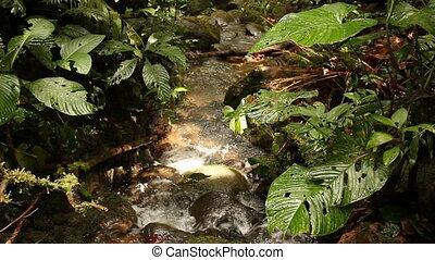 Rainforest stream - In the Upper Amazon, Ecuador at 940m...