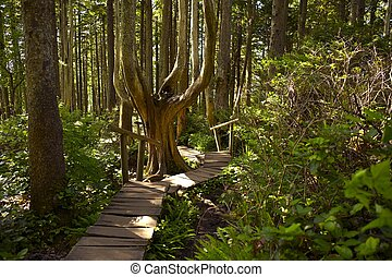 Rainforest Trail - Rainforest Hiking Theme. Wooden Pathway...
