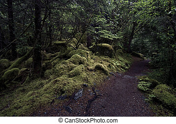 Rainforest trail terrain among trees