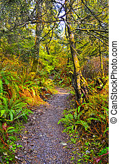 Rainforest Trail - Trail towards Third Beach in Olympic...