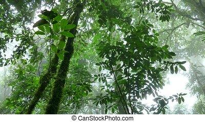 Rainforest Trees Jungle Costa Rica - View of Tenorio Volcano...