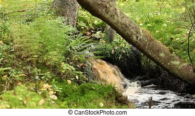 waterfall among the lush greenery - rainforest waterfall...