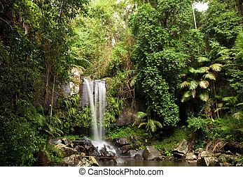 Rainforest Waterfall - Waterfall making its way into a pond...
