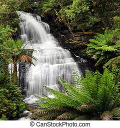 Rainforest Waterfall - Waterfall in lush ferny rainforest....