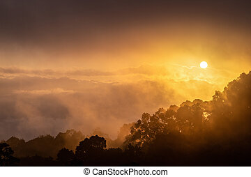 Rainforest with clouds and fog at sunrise