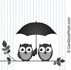 Raining - Owls sheltering from the rain isolated on white...