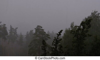 Rainstorm with Lightning in the Green Forest. Slow Motion. Rain Drops Falling.