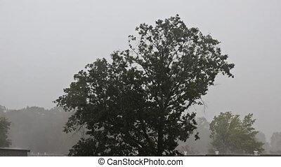 rainwater, pluie, lourd, maison, overflows, ville, été, ruisseau, toit, automne