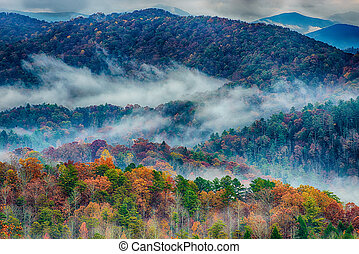 Rainy Autumn Day in the Great Smoky Mountains