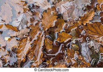 rainy autumn leaf background