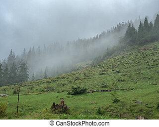 Rainy day in mountain pasture. Carpathians mountains, west...