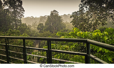 Rainy day in rainforest, wiew from the Canopy Walk Tower In...