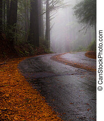 rainy highway in the redwood forest
