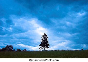 Rainy landscape with single tree